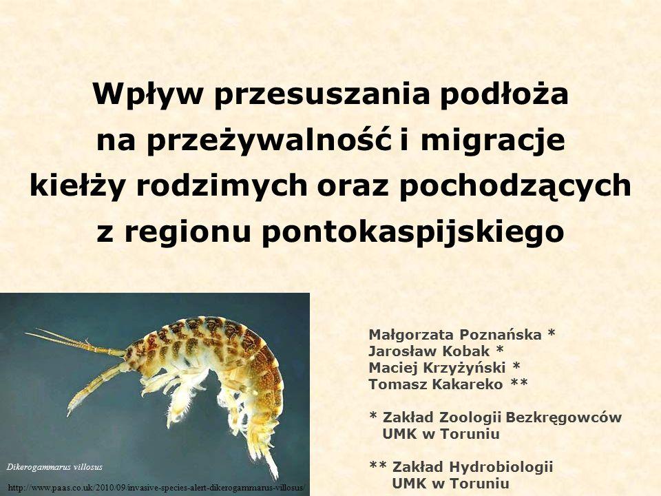 Wpływ przesuszania podłoża na przeżywalność i migracje kiełży rodzimych oraz pochodzących z regionu pontokaspijskiego http://www.paas.co.uk/2010/09/invasive-species-alert-dikerogammarus-villosus/ Dikerogammarus villosus Małgorzata Poznańska * Jarosław Kobak * Maciej Krzyżyński * Tomasz Kakareko ** * Zakład Zoologii Bezkręgowców UMK w Toruniu ** Zakład Hydrobiologii UMK w Toruniu