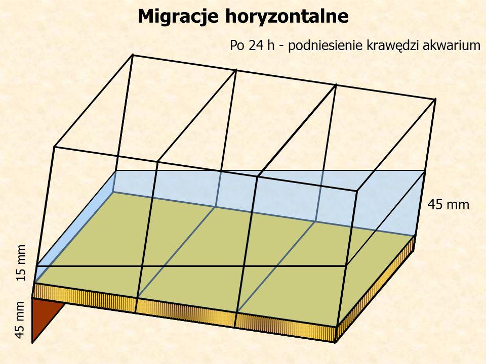 Po 24 h - podniesienie krawędzi akwarium Migracje horyzontalne 45 mm 15 mm 45 mm