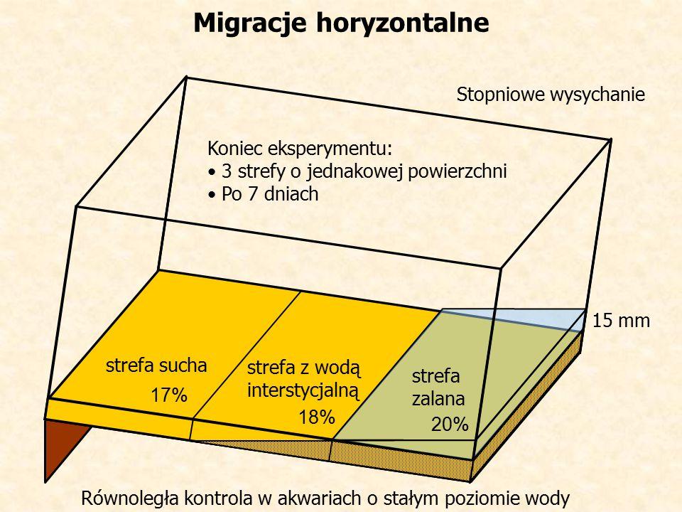 Migracje horyzontalne 15 mm strefa sucha strefa zalana strefa z wodą interstycjalną Stopniowe wysychanie Koniec eksperymentu: 3 strefy o jednakowej powierzchni Po 7 dniach Równoległa kontrola w akwariach o stałym poziomie wody 17% 18% 20%