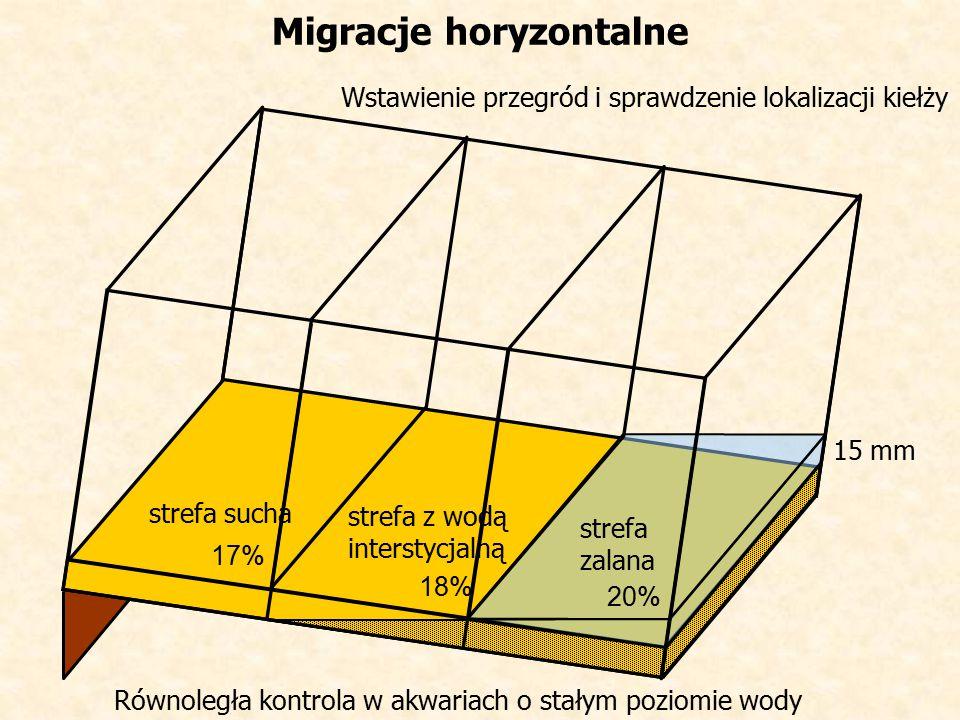 Wstawienie przegród i sprawdzenie lokalizacji kiełży Migracje horyzontalne strefa sucha strefa zalana strefa z wodą interstycjalną 15 mm Równoległa kontrola w akwariach o stałym poziomie wody 17% 18% 20%