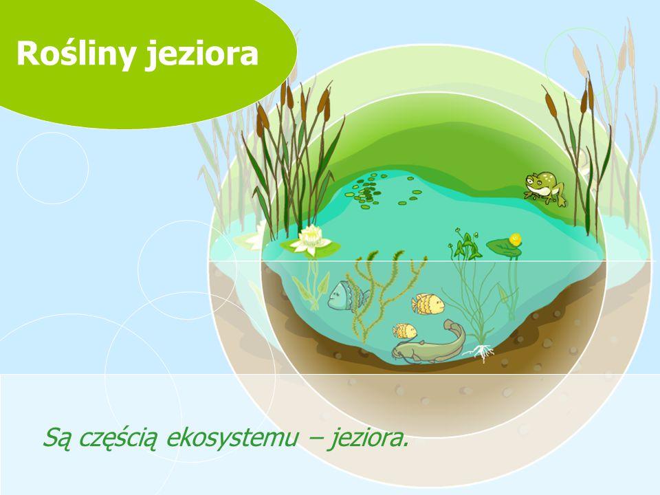 Rośliny jeziora Są częścią ekosystemu – jeziora.