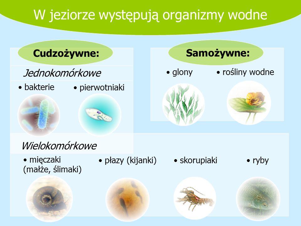 Wielokomórkowe mięczaki (małże, ślimaki) płazy (kijanki) skorupiaki ryby Jednokomórkowe bakterie pierwotniaki glony rośliny wodne Cudzożywne:Samożywne
