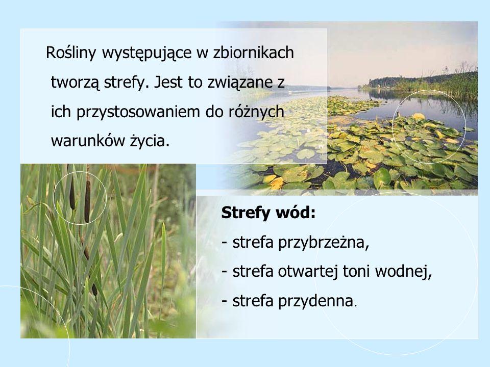 Rośliny występujące w zbiornikach tworzą strefy. Jest to związane z ich przystosowaniem do różnych warunków życia. Strefy wód: - strefa przybrzeżna, -
