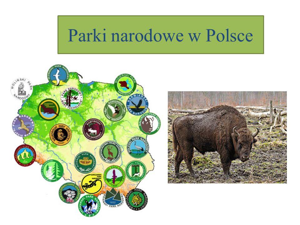 """Park narodowy to: """"Obszar wyróżniający się szczególnymi wartościami przyrodniczymi, na którym ochronie podlega cała przyroda oraz walory krajobrazowe ."""