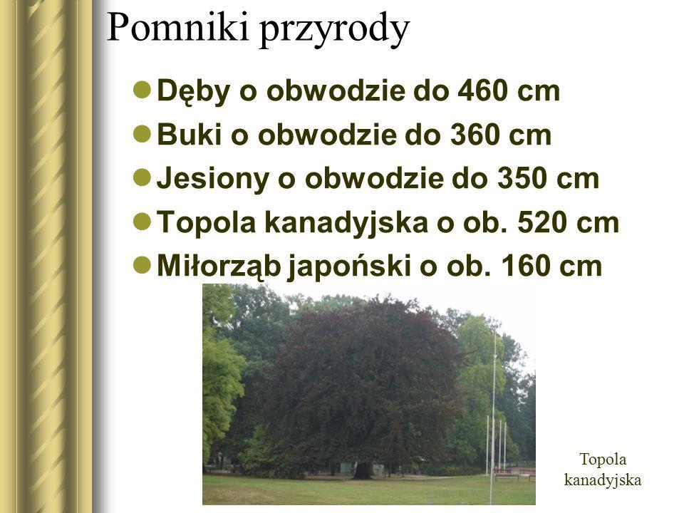 Pomniki przyrody Dęby o obwodzie do 460 cm Buki o obwodzie do 360 cm Jesiony o obwodzie do 350 cm Topola kanadyjska o ob. 520 cm Miłorząb japoński o o