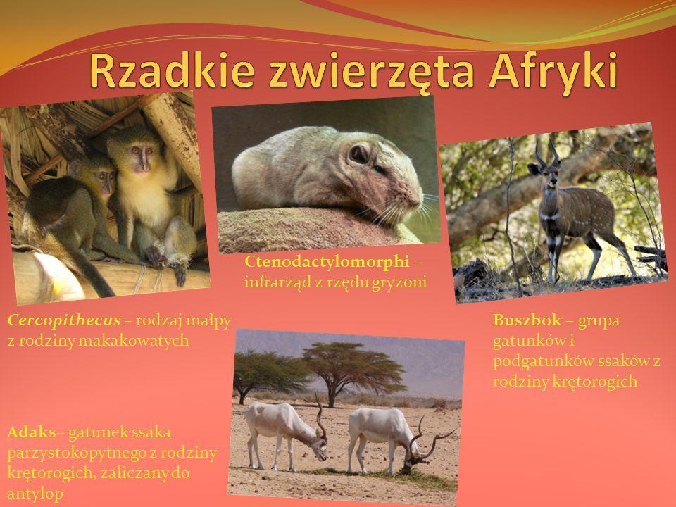 Cercopithecus – rodzaj małpy z rodziny makakowatych Adaks– gatunek ssaka parzystokopytnego z rodziny krętorogich, zaliczany do antylop Ctenodactylomor