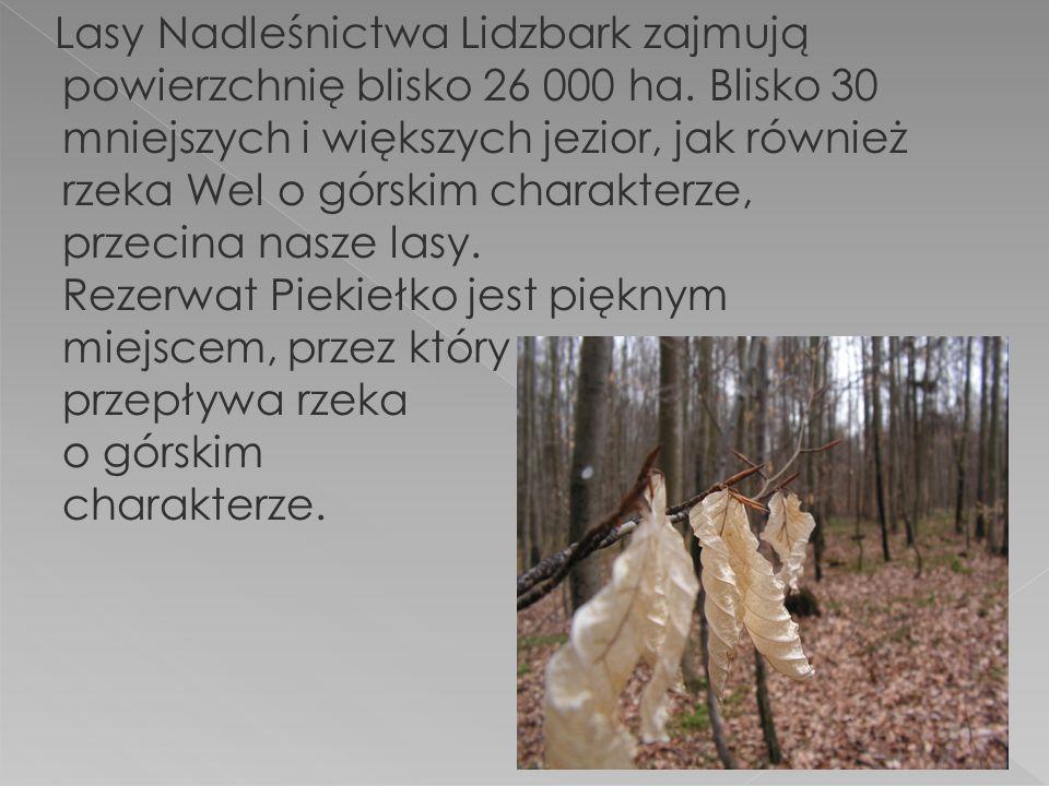 Lasy Nadleśnictwa Lidzbark zajmują powierzchnię blisko 26 000 ha.