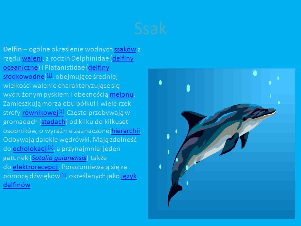 Ssak Delfin – ogólne określenie wodnych ssaków z rzędu waleni, z rodzin Delphinidae (delfiny oceaniczne) i Platanistidae (delfiny słodkowodne) [1], obejmujące średniej wielkości walenie charakteryzujące się wydłużonym pyskiem i obecnością melonu.ssakówwalenidelfiny oceanicznedelfiny słodkowodne [1]melonu Zamieszkują morza obu półkul i wiele rzek strefy równikowej [1].