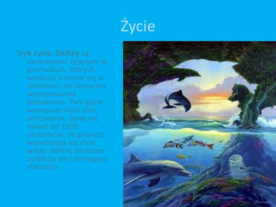 Życie Tryb życia: Delfiny są zwierzętami żyjącymi w gromadach, których wielkość zmienia się w zależności od obszarów występowania pożywienia.