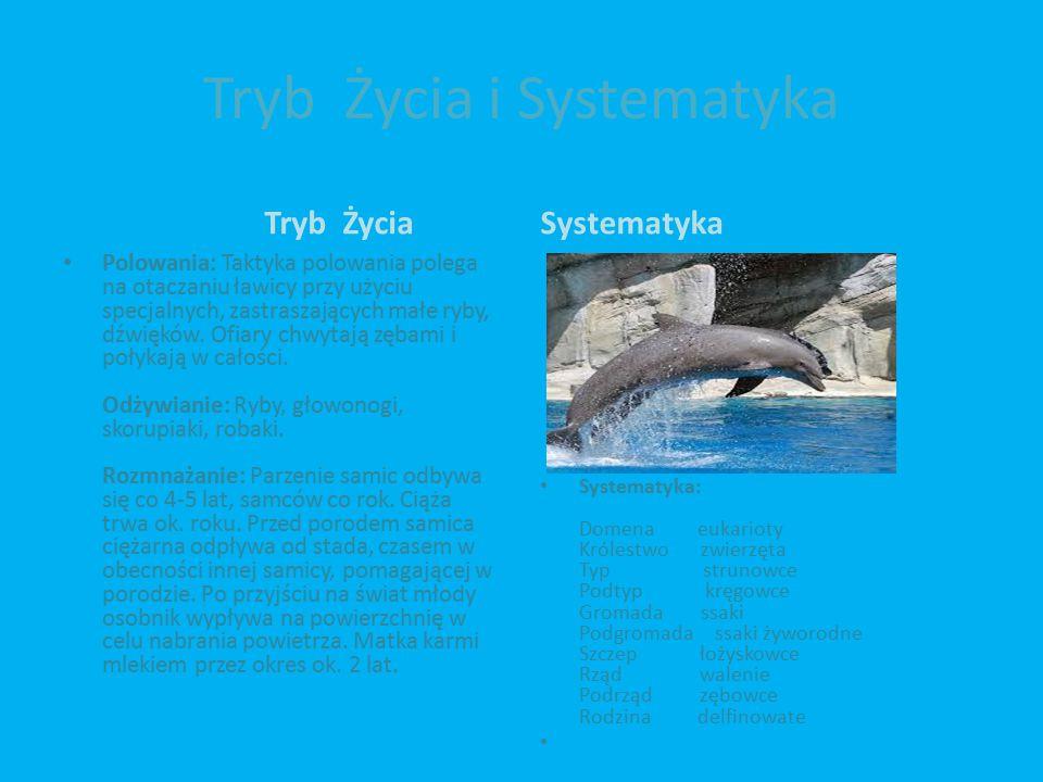 Tryb Życia i Systematyka Tryb Życia Polowania: Taktyka polowania polega na otaczaniu ławicy przy użyciu specjalnych, zastraszających małe ryby, dźwięków.