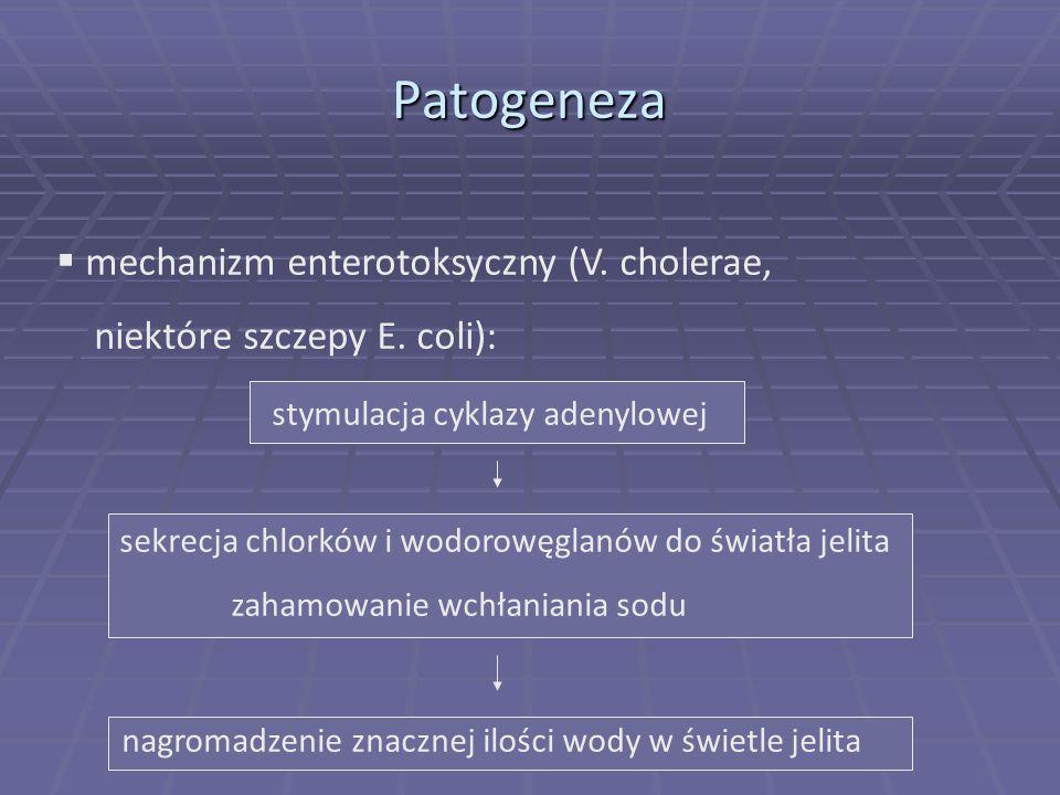  mechanizm enterotoksyczny (V.cholerae, niektóre szczepy E.
