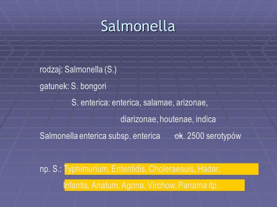 Salmonella rodzaj: Salmonella (S.) gatunek: S.bongori S.