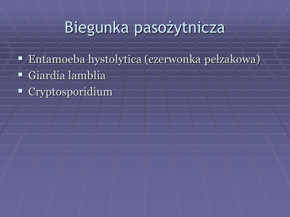 Biegunka pasożytnicza  Entamoeba hystolytica (czerwonka pełzakowa)  Giardia lamblia  Cryptosporidium