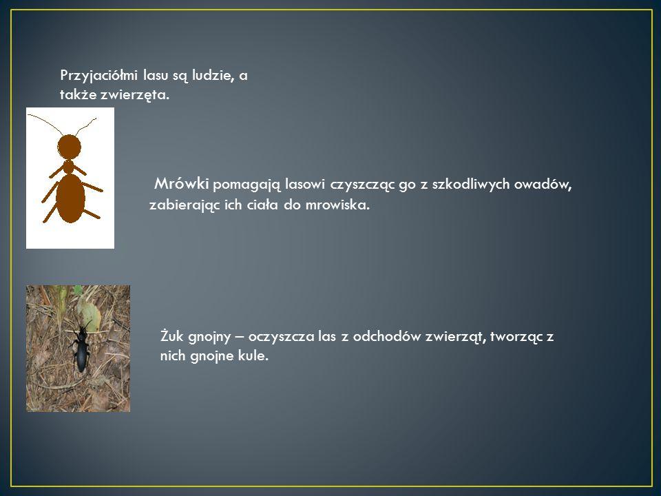 Przyjaciółmi lasu są ludzie, a także zwierzęta. Mrówki pomagają lasowi czyszcząc go z szkodliwych owadów, zabierając ich ciała do mrowiska. Żuk gnojny
