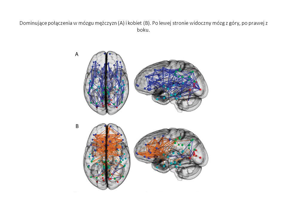 Dominujące połączenia w mózgu mężczyzn (A) i kobiet (B). Po lewej stronie widoczny mózg z góry, po prawej z boku.