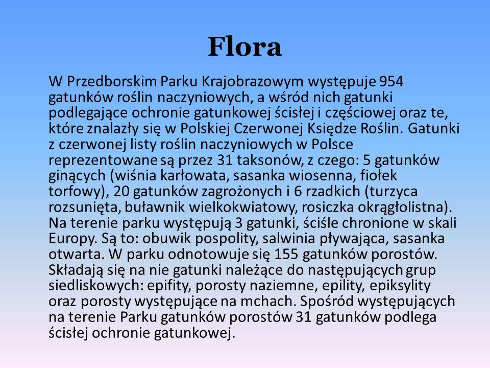 Flora W Przedborskim Parku Krajobrazowym występuje 954 gatunków roślin naczyniowych, a wśród nich gatunki podlegające ochronie gatunkowej ścisłej i cz