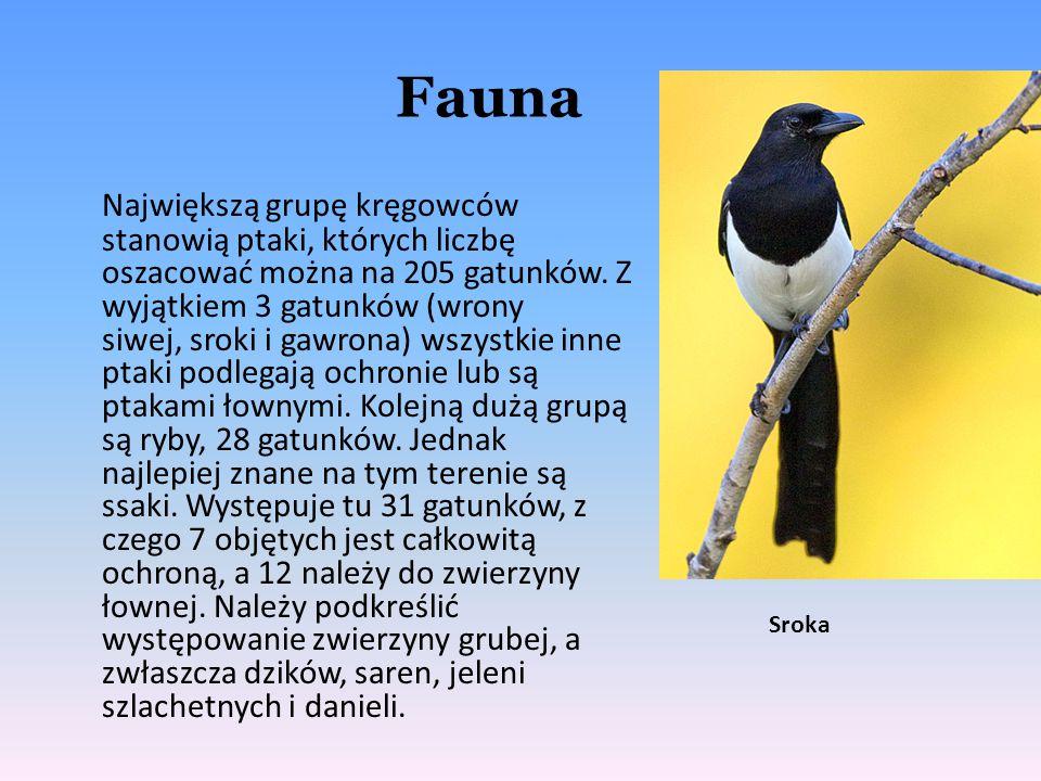 Fauna Największą grupę kręgowców stanowią ptaki, których liczbę oszacować można na 205 gatunków. Z wyjątkiem 3 gatunków (wrony siwej, sroki i gawrona)