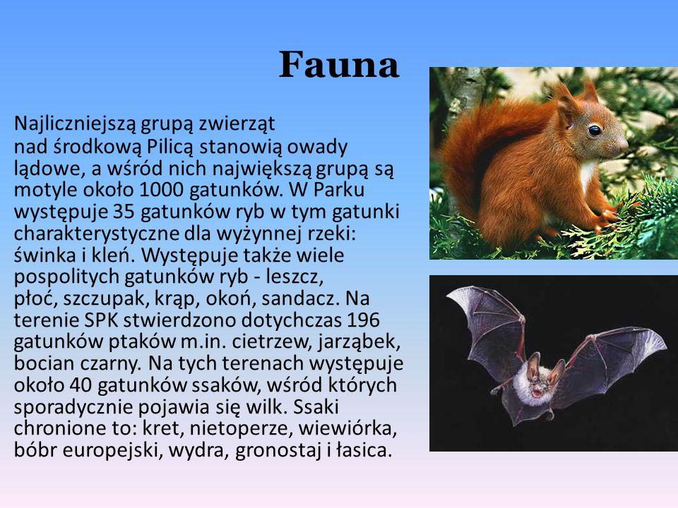 Fauna Najliczniejszą grupą zwierząt nad środkową Pilicą stanowią owady lądowe, a wśród nich największą grupą są motyle około 1000 gatunków. W Parku wy