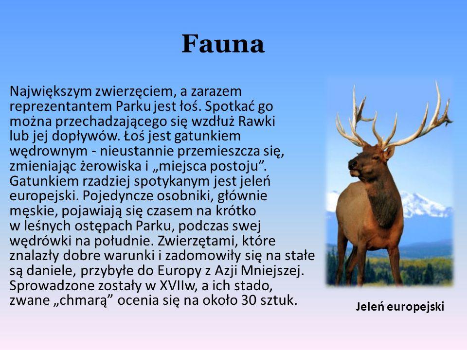 Fauna Największym zwierzęciem, a zarazem reprezentantem Parku jest łoś. Spotkać go można przechadzającego się wzdłuż Rawki lub jej dopływów. Łoś jest
