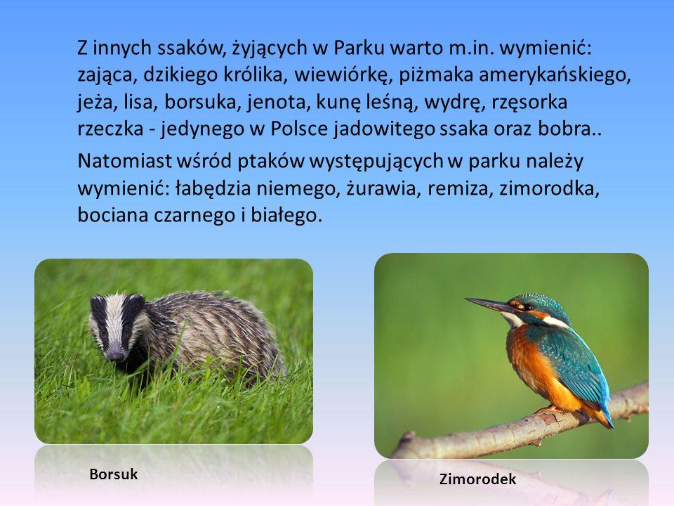 Z innych ssaków, żyjących w Parku warto m.in. wymienić: zająca, dzikiego królika, wiewiórkę, piżmaka amerykańskiego, jeża, lisa, borsuka, jenota, kunę