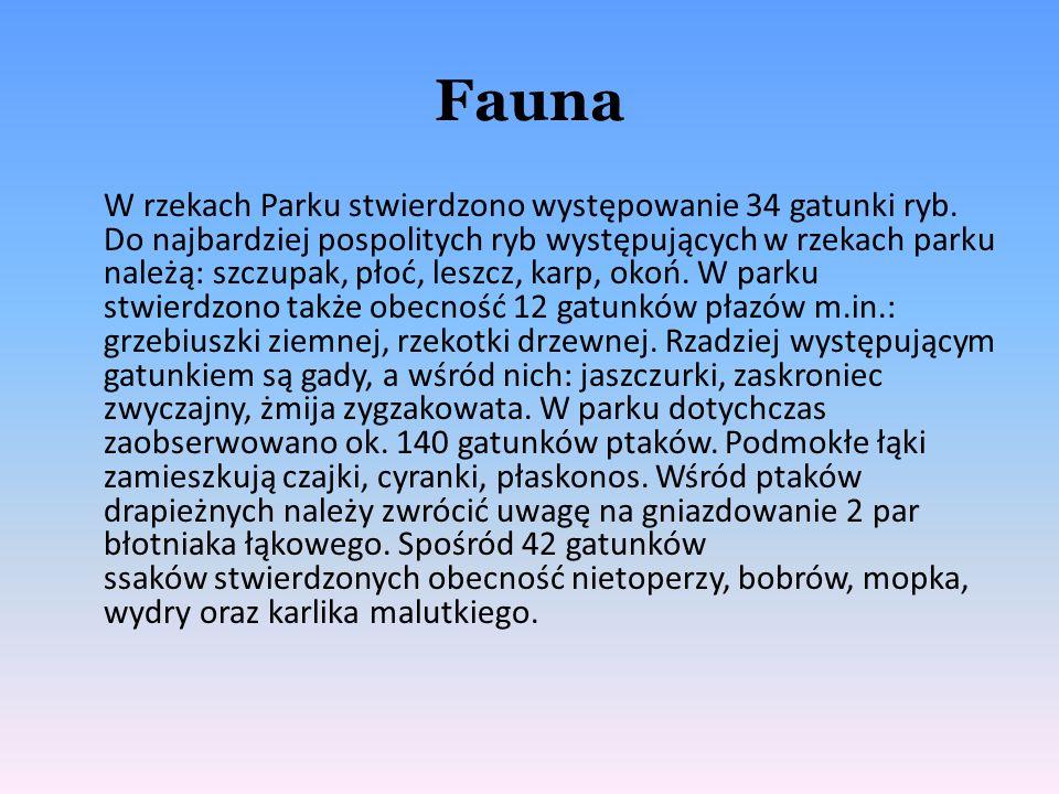 Fauna W rzekach Parku stwierdzono występowanie 34 gatunki ryb. Do najbardziej pospolitych ryb występujących w rzekach parku należą: szczupak, płoć, le