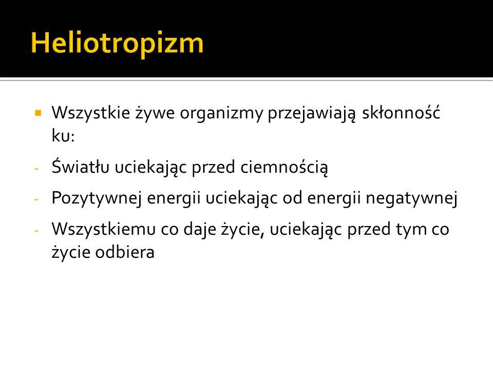 Podstawowe założenia dotyczą : czasu (np.polichronizm-monochronizm) przestrzeni (np.
