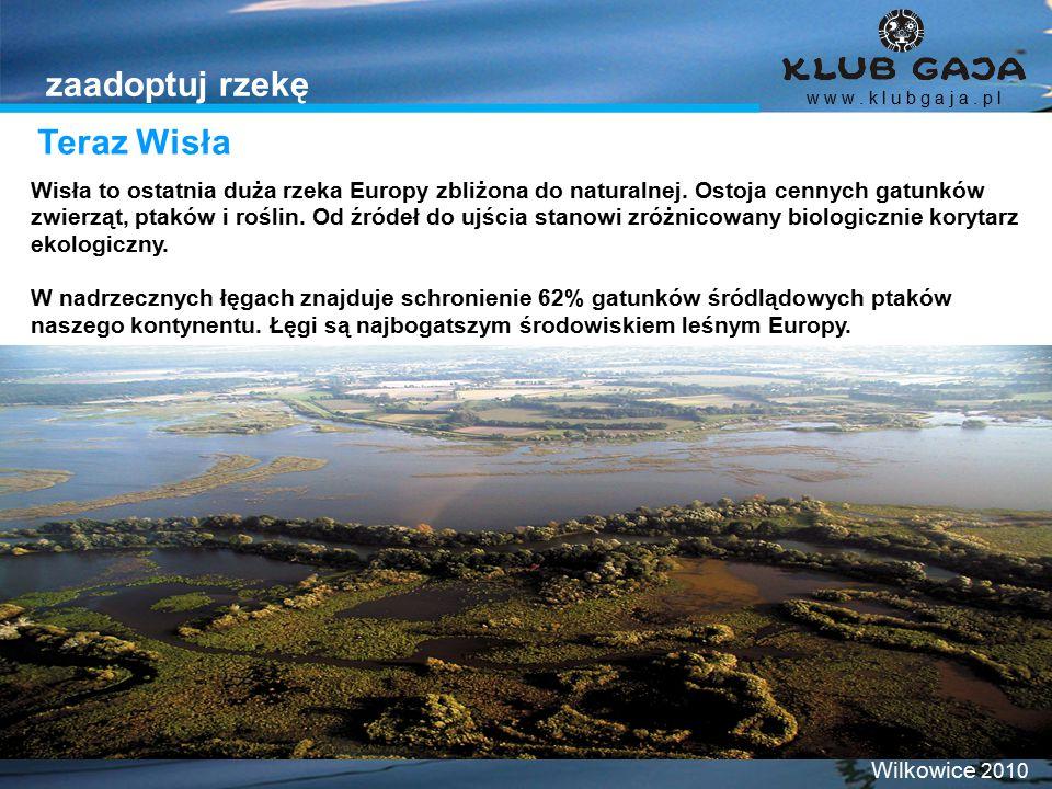 Teraz Wisła w w w. k l u b g a j a. p l Wilkowice 2010 zaadoptuj rzekę Wisła to ostatnia duża rzeka Europy zbliżona do naturalnej. Ostoja cennych gatu