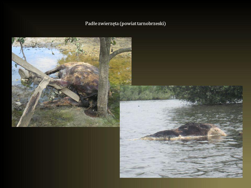 Padłe zwierzęta (powiat tarnobrzeski)