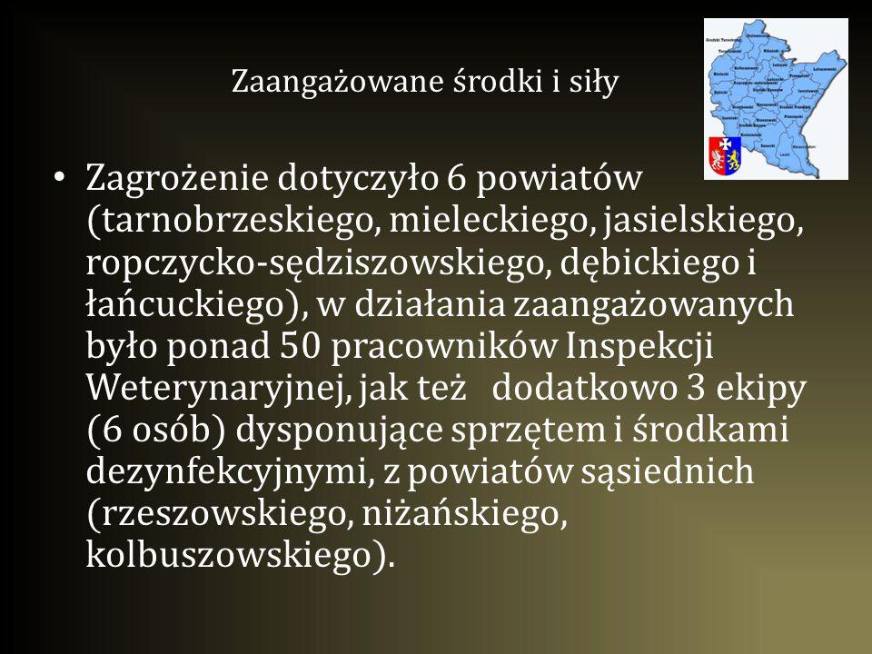Zagrożenie dotyczyło 6 powiatów (tarnobrzeskiego, mieleckiego, jasielskiego, ropczycko-sędziszowskiego, dębickiego i łańcuckiego), w działania zaangaż