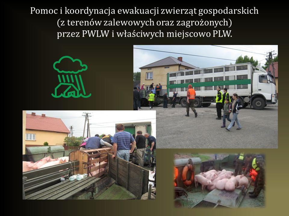 Pomoc i koordynacja przy organizacji zbiórki, odbioru, transportu i utylizacji sztuk padłych zwierząt z terenów powodziowych przez PLW.