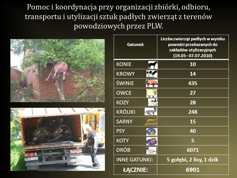 Pomoc i koordynacja przy organizacji zbiórki, odbioru, transportu i utylizacji sztuk padłych zwierząt z terenów powodziowych przez PLW. Gatunek Liczba