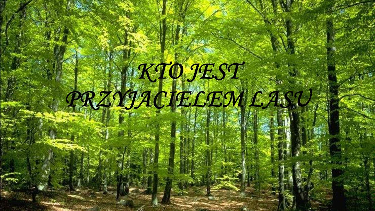 Przyjacielem lasu jest człowiek który: Będąc w lesie zachowuje się cicho, nie krzyczy, nie hałasuje ponieważ krzyki i głośne zachowanie może przeszkadzać żyjącym w nim zwierzętom.