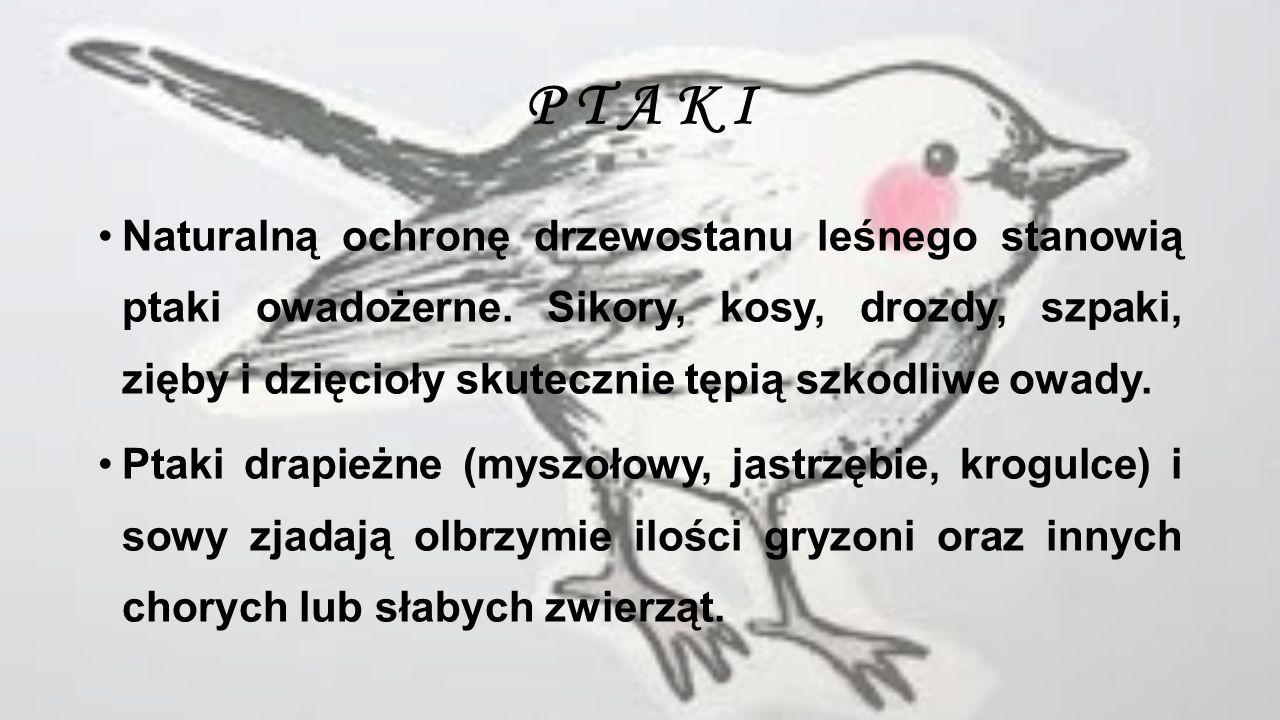 W I E W I Ó R K A Wiewiórka to typowe zwierzę leśne, nadrzewne, występujące w lasach liściastych i iglastych.