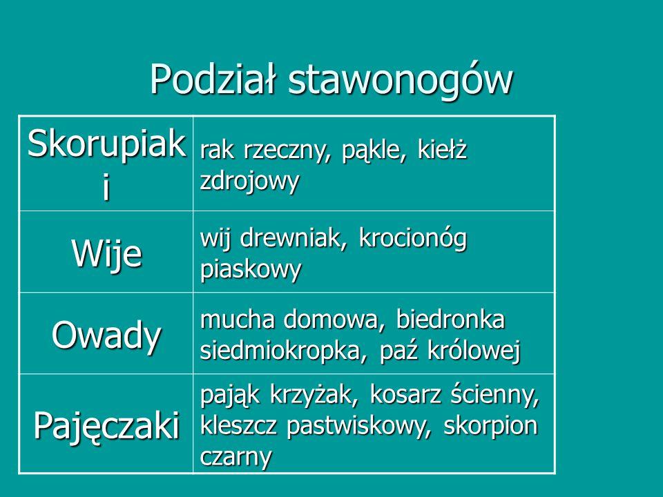 Podział stawonogów Skorupiak i rak rzeczny, pąkle, kiełż zdrojowy Wije wij drewniak, krocionóg piaskowy Owady mucha domowa, biedronka siedmiokropka, p