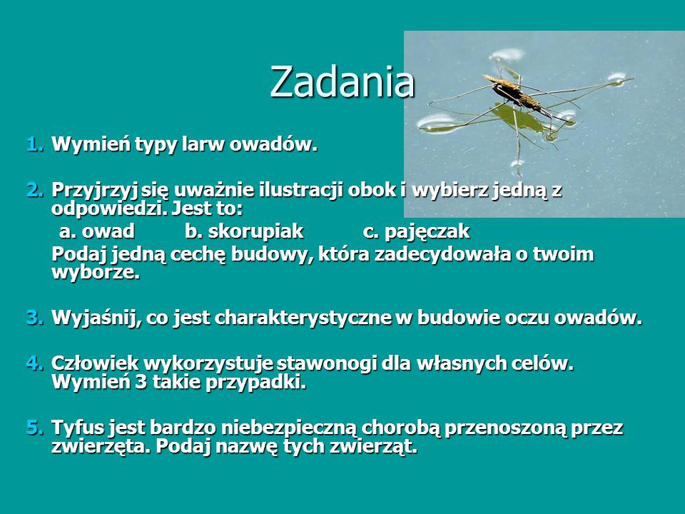 Zadania 1.Wymień typy larw owadów. 2.Przyjrzyj się uważnie ilustracji obok i wybierz jedną z odpowiedzi. Jest to: a. owad b. skorupiak c. pajęczak a.