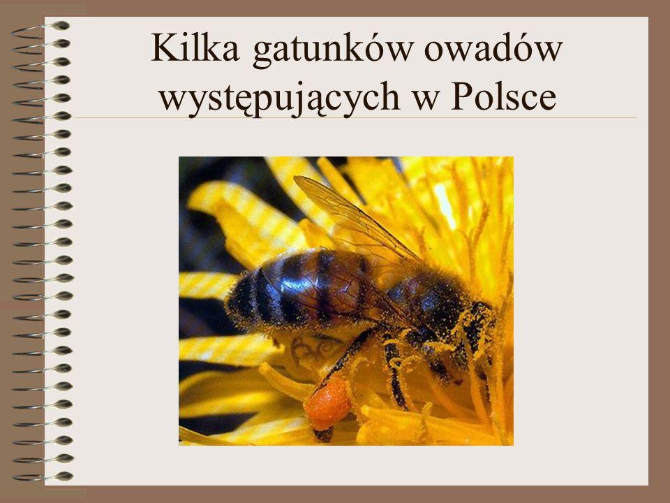 Kilka gatunków owadów występujących w Polsce