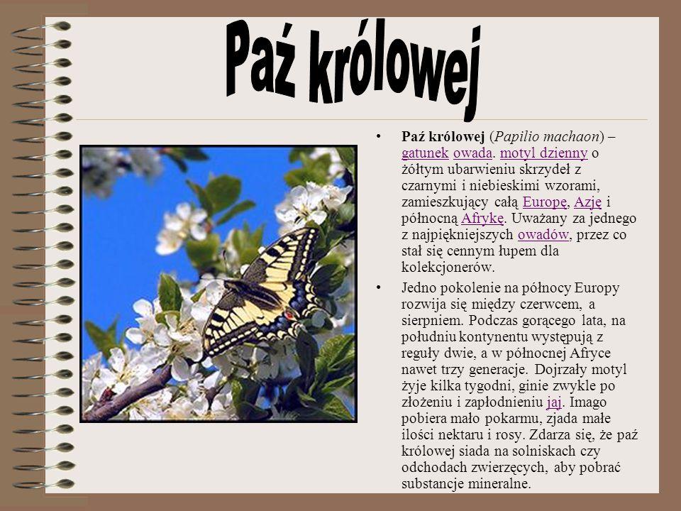 Paź królowej (Papilio machaon) – gatunek owada. motyl dzienny o żółtym ubarwieniu skrzydeł z czarnymi i niebieskimi wzorami, zamieszkujący całą Europę