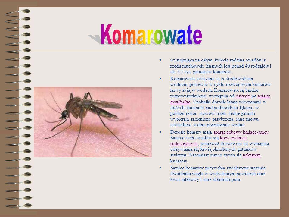 występująca na całym świecie rodzina owadów z rzędu muchówek. Znanych jest ponad 40 rodzajów i ok. 3,5 tys. gatunków komarów. Komarowate związane są z