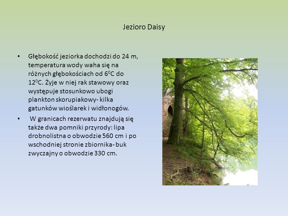 Jezioro Daisy Głębokość jeziorka dochodzi do 24 m, temperatura wody waha się na różnych głębokościach od 6 0 C do 12 0 C. Żyje w niej rak stawowy oraz