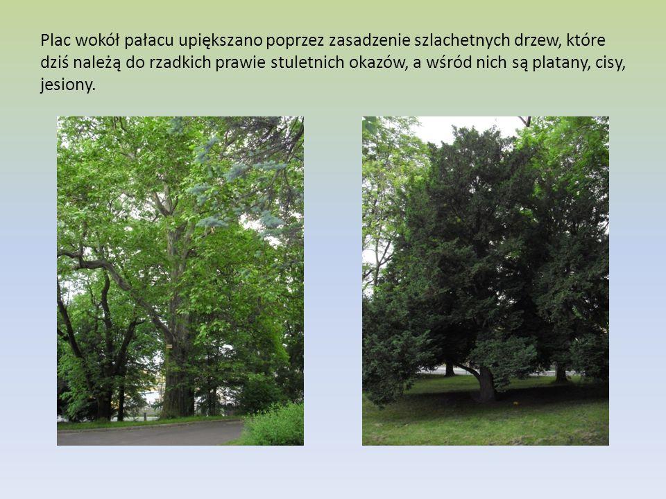 Plac wokół pałacu upiększano poprzez zasadzenie szlachetnych drzew, które dziś należą do rzadkich prawie stuletnich okazów, a wśród nich są platany, c