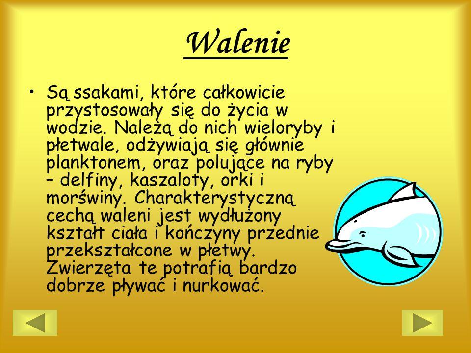 Walenie Są ssakami, które całkowicie przystosowały się do życia w wodzie. Należą do nich wieloryby i płetwale, odżywiają się głównie planktonem, oraz