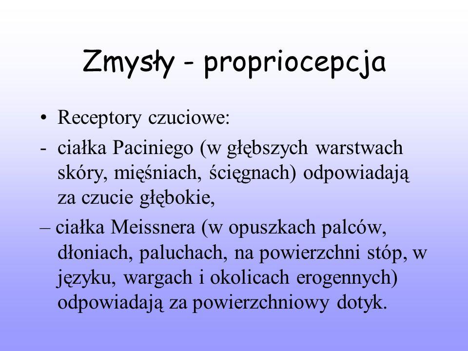 Zmysły - propriocepcja Receptory czuciowe: -ciałka Paciniego (w głębszych warstwach skóry, mięśniach, ścięgnach) odpowiadają za czucie głębokie, – ciałka Meissnera (w opuszkach palców, dłoniach, paluchach, na powierzchni stóp, w języku, wargach i okolicach erogennych) odpowiadają za powierzchniowy dotyk.