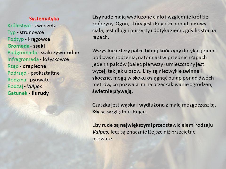Systematyka Królestwo - zwierzęta Typ - strunowce Podtyp - kręgowce Gromada- ssaki Podgromada - ssaki żyworodne Infragromada - łożyskowce Rząd - drapi