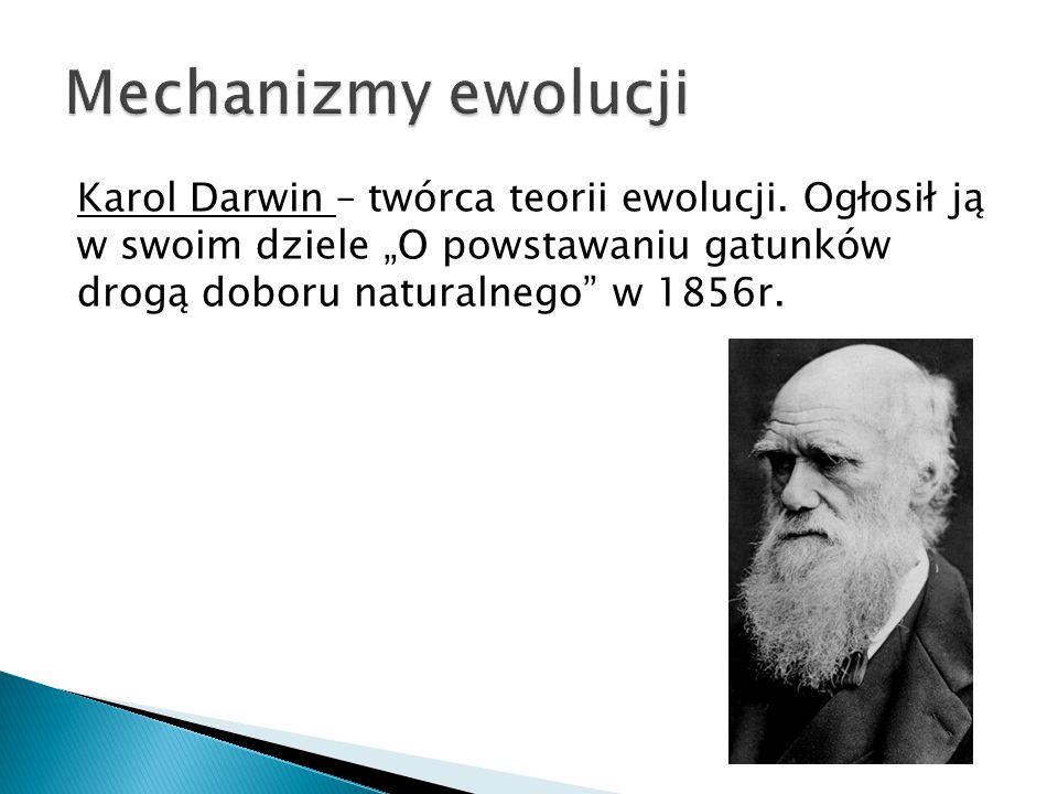 """Karol Darwin – twórca teorii ewolucji. Ogłosił ją w swoim dziele """"O powstawaniu gatunków drogą doboru naturalnego"""" w 1856r."""