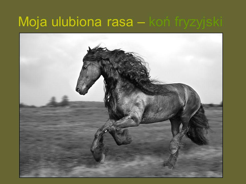 I znowu z końmi…