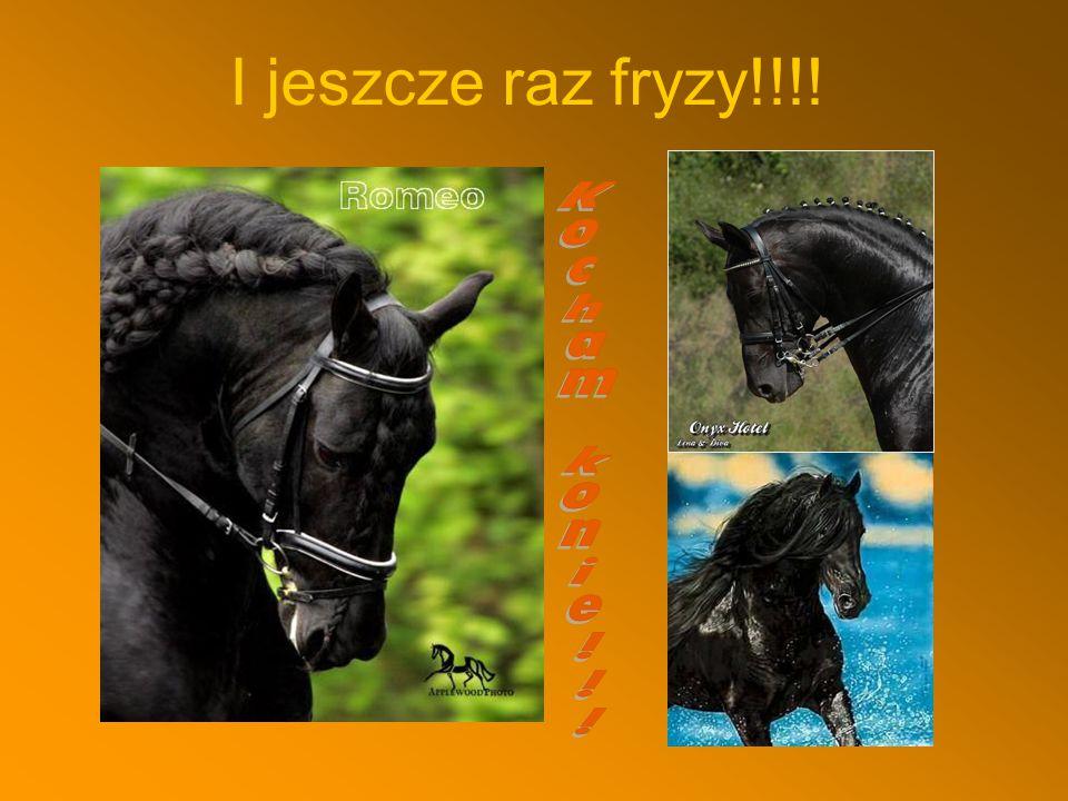 Co wiem o mojej ulubionej rasie.Koń fryzyjski (fryz) pochodzi z Holandii (Fryzja).