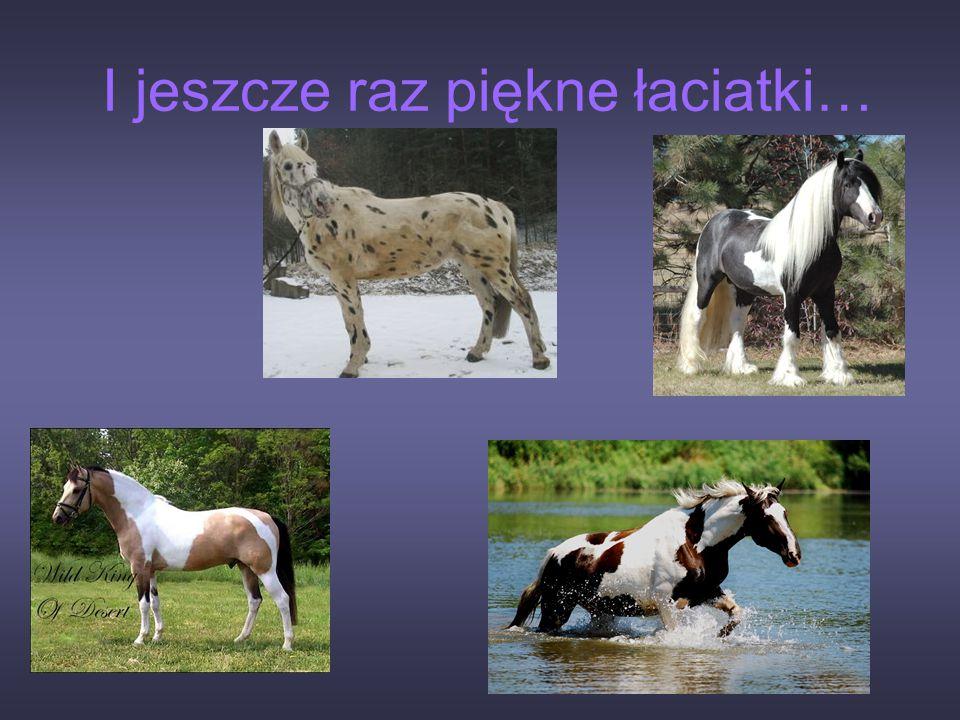 Są różne ubarwienia koni: