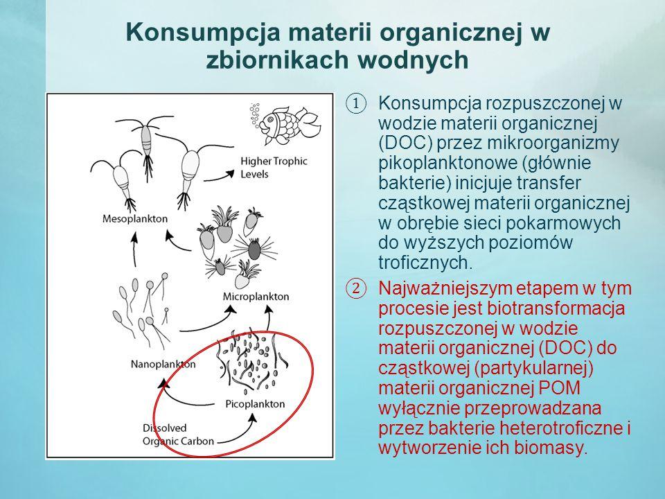 Konsumpcja materii organicznej w zbiornikach wodnych ① Konsumpcja rozpuszczonej w wodzie materii organicznej (DOC) przez mikroorganizmy pikoplanktonowe (głównie bakterie) inicjuje transfer cząstkowej materii organicznej w obrębie sieci pokarmowych do wyższych poziomów troficznych.