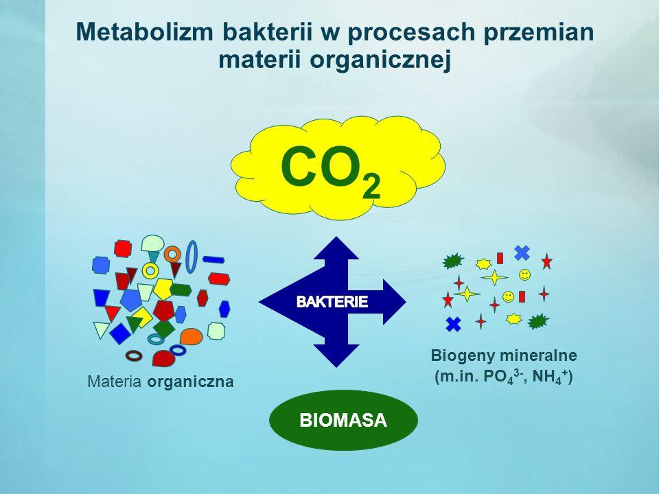 Metabolizm bakterii w procesach przemian materii organicznej CO 2 BIOMASA Materia organiczna Biogeny mineralne (m.in. PO 4 3-, NH 4 + )