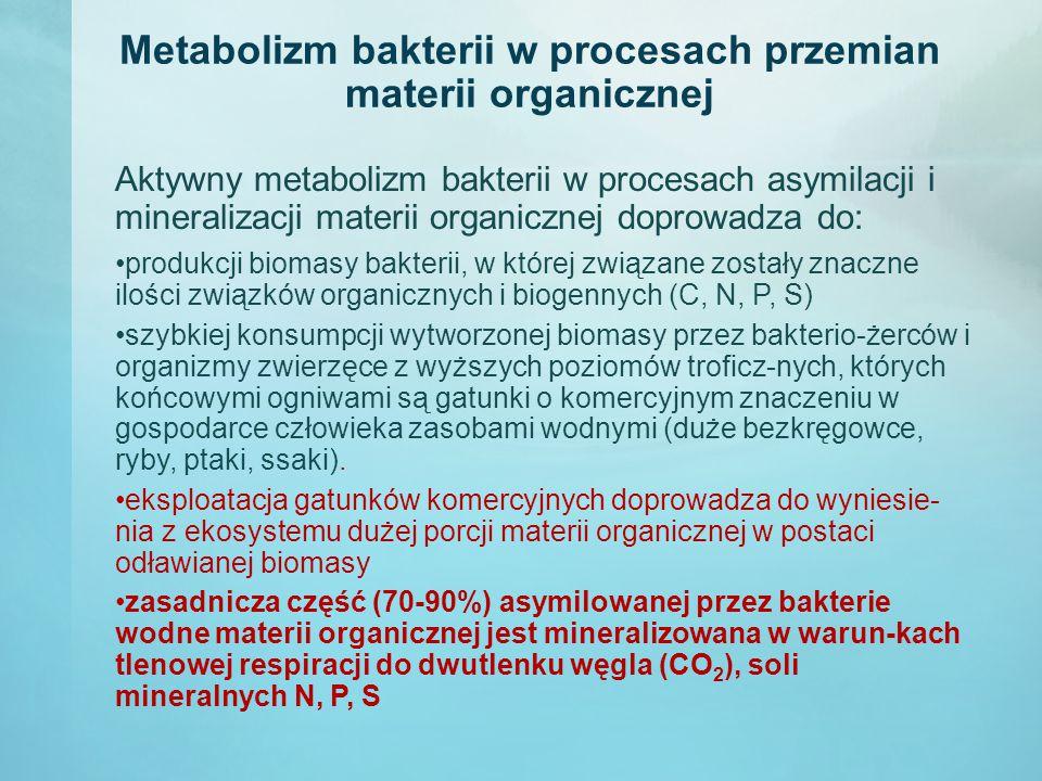 Metabolizm bakterii w procesach przemian materii organicznej Aktywny metabolizm bakterii w procesach asymilacji i mineralizacji materii organicznej doprowadza do: produkcji biomasy bakterii, w której związane zostały znaczne ilości związków organicznych i biogennych (C, N, P, S) szybkiej konsumpcji wytworzonej biomasy przez bakterio-żerców i organizmy zwierzęce z wyższych poziomów troficz-nych, których końcowymi ogniwami są gatunki o komercyjnym znaczeniu w gospodarce człowieka zasobami wodnymi (duże bezkręgowce, ryby, ptaki, ssaki).